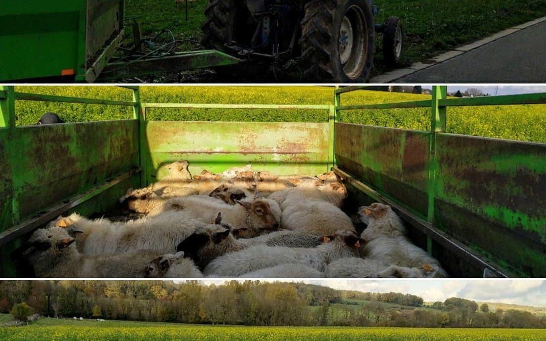Déplacement de troupeau et bénéfice des cultures