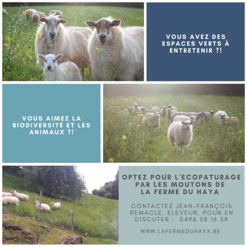 Optez pour l'écopaturage de vos espaces verts par nos moutons