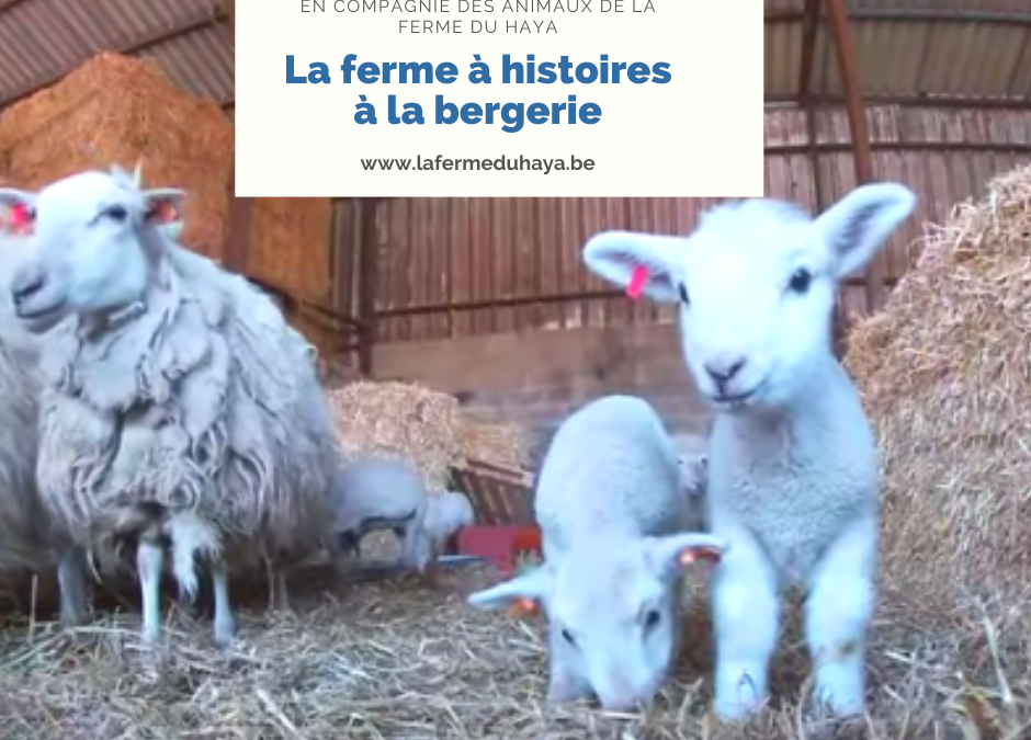 La ferme à histoires est à la bergerie : lecture de «Madame Meuh»