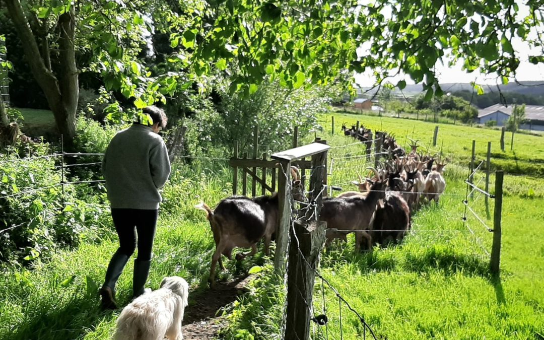 La ferme à histoires en balade à la chèvrerie de Borlon